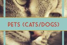 Pets (Cats & Dogs) / Here you will find tips and tricks to pet ownership. DIY, information, training, food, treats, and more.