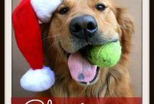 Christmas / Christmas DIY Ornaments and Crafts, Christmas Decorating, Christmas Home Decor, Christmas Food, Christmas Drinks