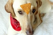 Four-legged Fans   Beanitos / Our furry fans who love Beanitos!