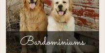 Barndominiums / Barndominiums and Cottage Homes, Interiors and Layouts