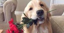 Valentines Day / Valentines decor, crafts, images