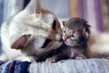 KISS! KISS!! KISS!!!