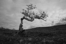 THE MAGPIE / Inspirational photos for YA historical novel with elements of Irish mythology