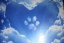 Dogs: Unbearable Loss...