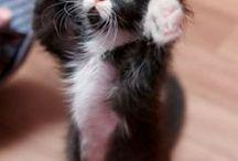 Коты, кошки, котики! Постим котиков!
