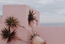 pinks n greens