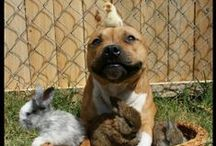 "Save the Bullies / Dedicated to the misunderstood ""Bully"" breeds of the dog world / by Geneva Hendrix"