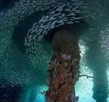 Artificial Reefs / Safe havens, new spaces and places for marine life to call home.