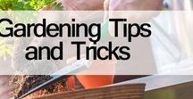 Gardening Tips and Tricks / Best Gardening Tips and Tricks for Beginners & amazing Ideas, Expert Gardening Tips