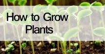 How to Grow Plants / How to Grow Plants, find Easy Tips for Growing Plants and how to grow plants at home