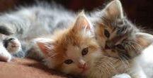 Kittens of Pinterest