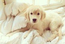 Furry Friends / Animals make the best friends  #Animals #Pets #Dog #Puppy