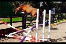 Horse jokes