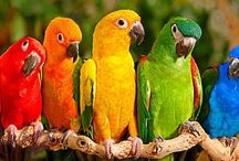 Color - True Colors like a Rainbow / True Colors