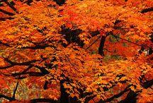 Color - Orange you glad