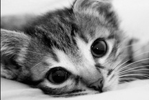 Cute animals / Pets, wild beasts, all need our love and protection