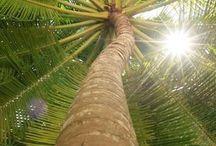 Palmeiras / Na minha terra tem palmeiras onde canta o sabiá