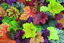 Gardening / by Carolyn Dell-Murray