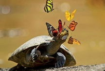Butterfies, Frogs and Bugs / by Tracy F D