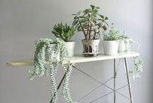 I NDOOR PLANTS