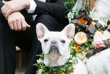 PETS AT WEDDINGS / pets at wedding, dog at wedding, farm animals wedding, how to have your dog in your wedding, cute wedding pictures dog, dog wreath wedding, dog in wedding ceremony, dog outfit wedding, special wedding bandana dog