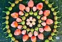 ✿ Plant Mandalas ✿ / Flower & Herb Mandalas