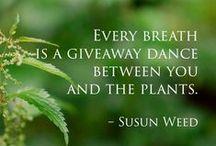 ✿ Plant Spirit Medicine ✿ / Plant Spirit Medicine