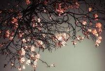 CHERRY \\ Renewal / Healing with Cherry. Herbal / Plant Spirit Medicine
