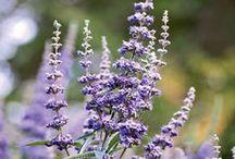VITEX \\ Self-Mastery / Healing with Vitex. Herbal / Plant Spirit Medicine
