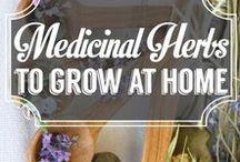 ✿ Medicinal Herb Garden ✿