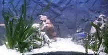 Aquarium verlichting