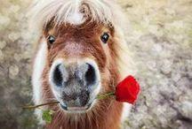 I heart HORSES / For the love of horses...