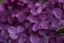 Flowers / by Jerry Ockfen