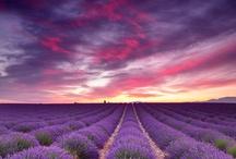 La Provence / by Céline Blondelle