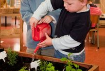 Class Garden Project / Ideas for when I have my own class again. Bits and pieces for an outdoor class garden and also for a year round indoor activity table. (Nature Smart)