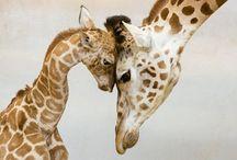 Animals Are beautiful... / by Allison Harper