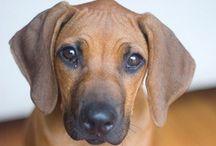Puppy Love / by Ashley Flood