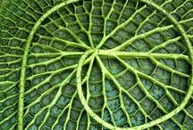 Spirals, Rings and Circles