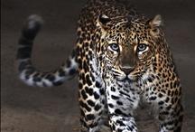 Animal Kingdom - Amazing / by Carol Jeanne