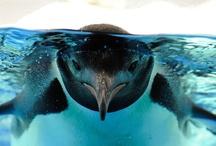 Penguin→