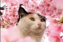 Gatos e Flores...  / Cat and flowers..