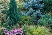 Interesting Trees Large Space Design Ideas / Interesting Trees Large Space Design Ideas