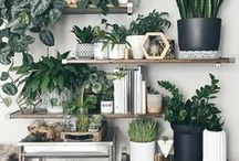 Indoor Plants + Indoor Gardening / Don't have an outdoor space? That's okay, you can still have an indoor garden or green space! How to grow plants in your apartment, indoor plants, indoor gardening, low light plants, house plants, cacti and succulents, terrariums, and air plants.