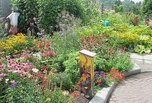 Bird Garden - Creating my Sanctuary