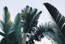 Tropical // / #tropical #tropicool #palm #green / by Manon