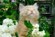 Too Cute! <3