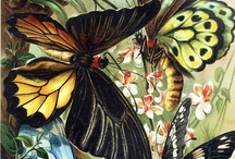 Butterflies and Moths / by Nell K.