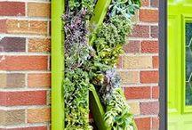Plants ... Succulent Designs