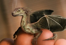 Here be Dragons / by Yvonne Becker