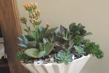 LeBrun Designs...Potted Gardens / I live in the Upstate of South Carolina and enjoy Landscape Design and growing my own succulents on the side;)
